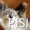 PISI API